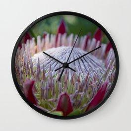 King Protea Island Flowers Jewel of the Garden Wall Clock