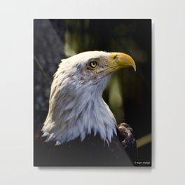 Proud Bald Eagle Metal Print