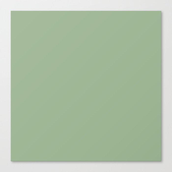 Solid Color SAGE GREEN  Leinwanddruck