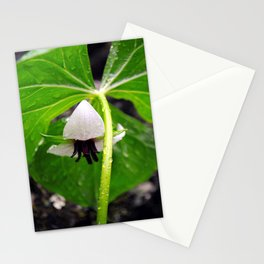 Nodding Trillium Flower Fine Art Print, Botanical Art, Wildflower Print Stationery Cards