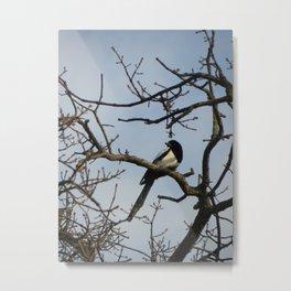 Magpie on an Oak tree Metal Print