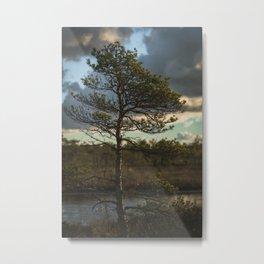 Tiny Tree | Bush | Colorful Nature Shots | Colourful | Latvia | Swamp | Sunrise | Sunup | Natural | Vertical | European Nature Metal Print