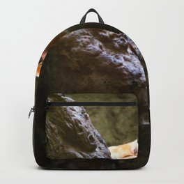 Golden Lion Tamarin looking out Backpack