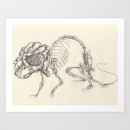 Mouse Skeleton Art Print