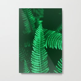 Pacific Northwest Fern Forest Adventure II Metal Print