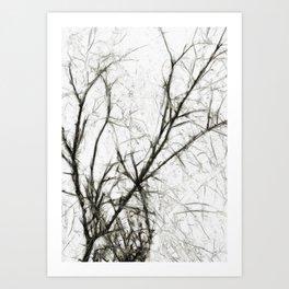 Pale Presence of Trees in Winter Art Print