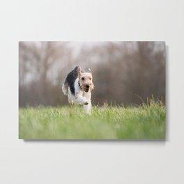 Fox Terrier Funny Dog Metal Print