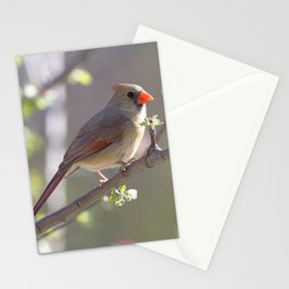 Watercolor Bird, Cardinal 02, Middletown, Maryland Stationery Cards