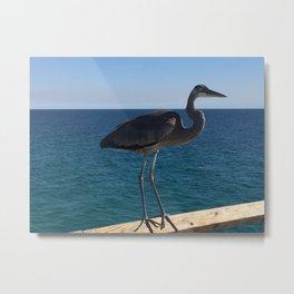 Blue Heron on the pier Metal Print