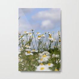 white beautiful chamomile Metal Print