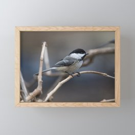 Chickadee Framed Mini Art Print