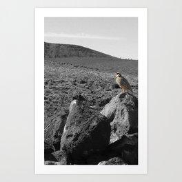 Desert Bird No 2 Art Print