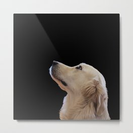 Man's Best Friend - Labrador Dog Portrait Metal Print