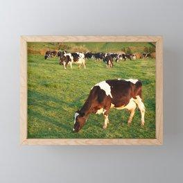 Holstein cattle Framed Mini Art Print