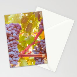 Grapevines 4 Stationery Cards