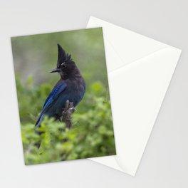 Steller's Jay near Park City, Utah Stationery Cards