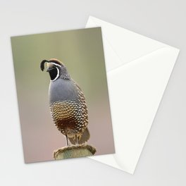 California Quail Stationery Cards
