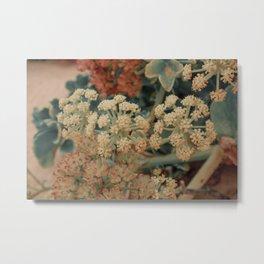 Beautiful closeup of Astydamia flowers Metal Print