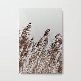 Fine Art photography wall-art. 'Reed'. Color Art Print Earthy Tones Metal Print