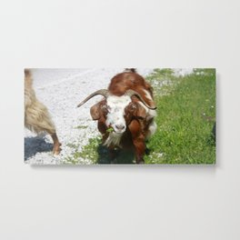 Whimsical Portrait of a Horned Goat Grazing Metal Print