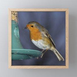 Robin comes for lunch Framed Mini Art Print