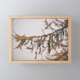 Pine tree in the autumn Framed Mini Art Print