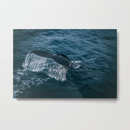 Whale Tail Emerging from the Ocean Metal Print