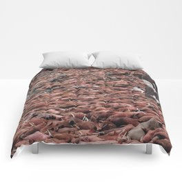 Counting Walrus Comforters
