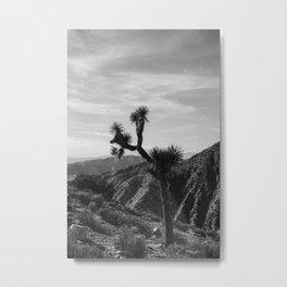 Joshua Tree National Park XXXIV Metal Print
