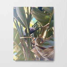 Wild Banana #2 (Encinitas) [Cecilia Lee] Metal Print