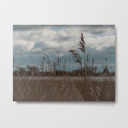 Reeds at Wheldrake Metal Print