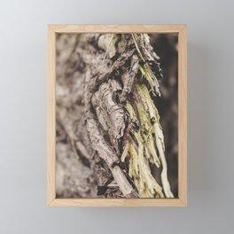 Fallen Tree I Forest Treasures I Detail Nature Photography Framed Mini Art Print