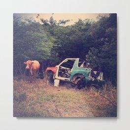 Struck by truck & cow in St. Thomas, Virgin Islands Metal Print