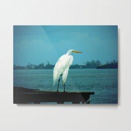 Egret on the pier Metal Print