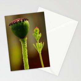 Poppy of Troy or Opium Poppy Stationery Cards