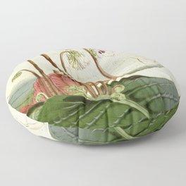 Streptocarpus saundersii 'Cape primrose' 1861 Floor Pillow