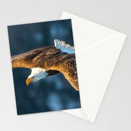 Beautiful Spectacular King Of Sky Bird Flowing Mid Air Zoom UHD Stationery Cards