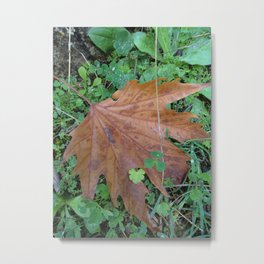Just a Leaf Metal Print