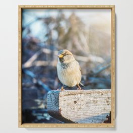 House sparrow bird perched in autumn Serving Tray