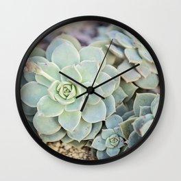 Echeveria Derenbergii Wall Clock