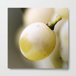 White grapes - extreme close up Metal Print