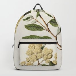 Antique plant Kumarahou drawn by Sarah Featon (1848-1927) Backpack