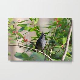Cat Bird in the Slough II Metal Print