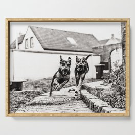 Dogs Have Fun At The Garden bw Serving Tray