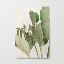 Strelitzia Nicolai in sunlight - Tropical art print in color Metal Print
