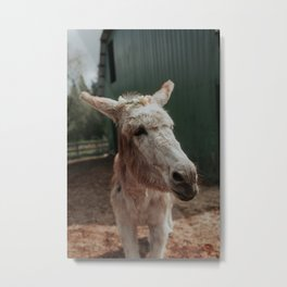 Baby in Bloom I Metal Print