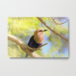 Sunshiny  Roller Bird by Reay of Light Photography Metal Print
