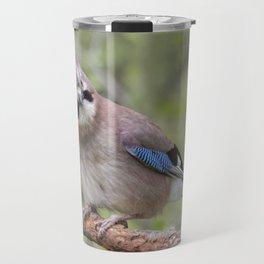 Shy colourful Jay bird Travel Mug