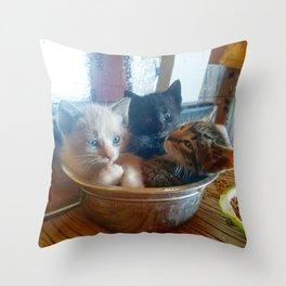 Three Kitties One Bowl Throw Pillow