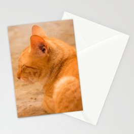 Orange Cat Resting On The Terrace #decor #society6 #buyart Stationery Cards